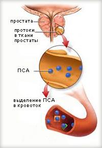 Прополис при везикулите